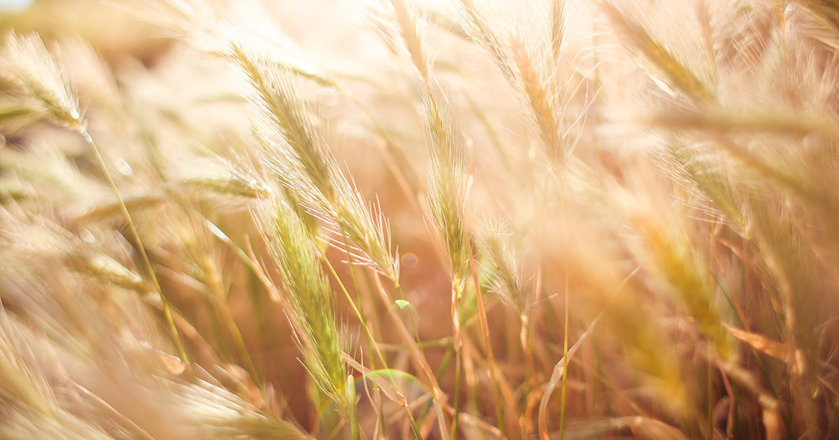 krediti za poticanje poljoprivrede